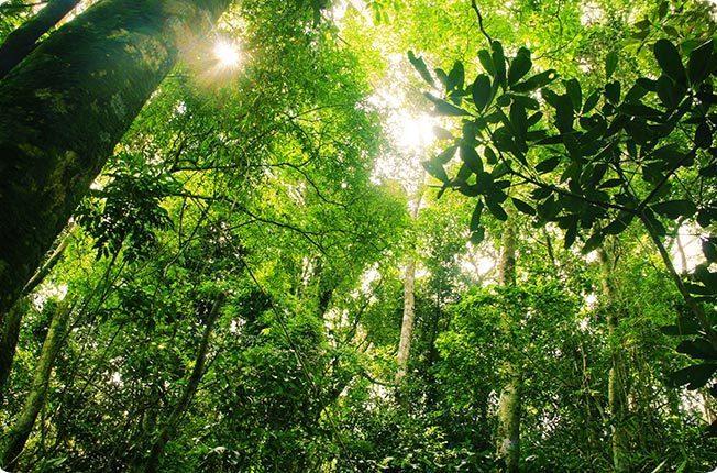 Ecuador Amazon Rainforest
