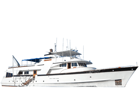 Beluga Galapagos Yacht - Thumbnails
