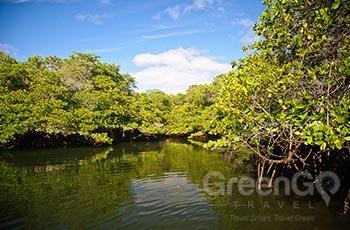 Black Turtle Cove - Galapagos