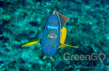 Buccaneer Cove - Galapagos