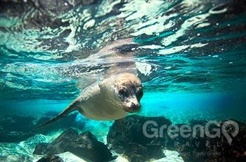 Eden Island - Galapagos