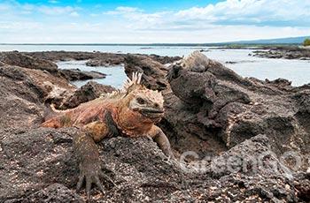 Galapagos Islets