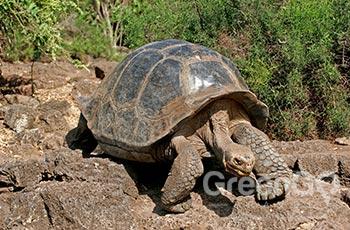 Galapaguera Colorado Hill - Galapagos