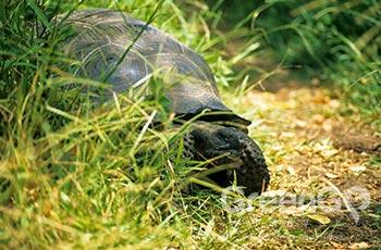 Galapaguera Natural - Galapagos