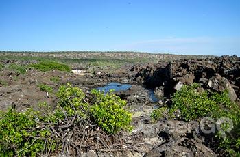 Genovesa Island - Galapagos