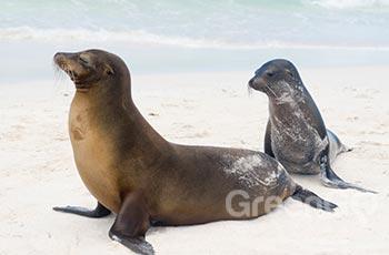 La Loberia - Galapagos