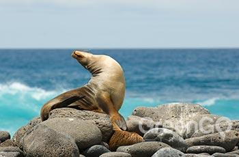 Lobos Island - Galapagos