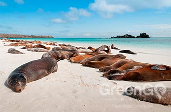 Mosquera Island - Galapagos