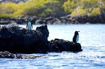 Punta Espinoza - Galapagos