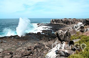 Suarez Point - Galapagos