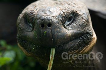 Tortoise Breeding Station - Galapagos