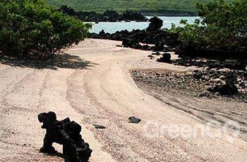Urbina Bay - Galapagos