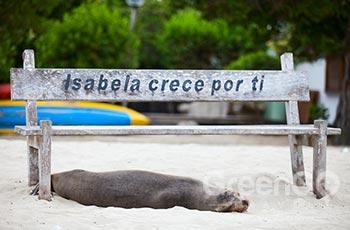 Villamil Port - Galapagos