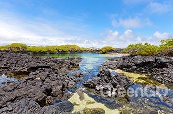 Wetlands - Galapagos