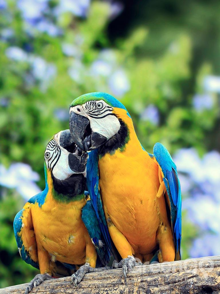 Guacamayo Lodge Amazon Rainforest Greengo Travel