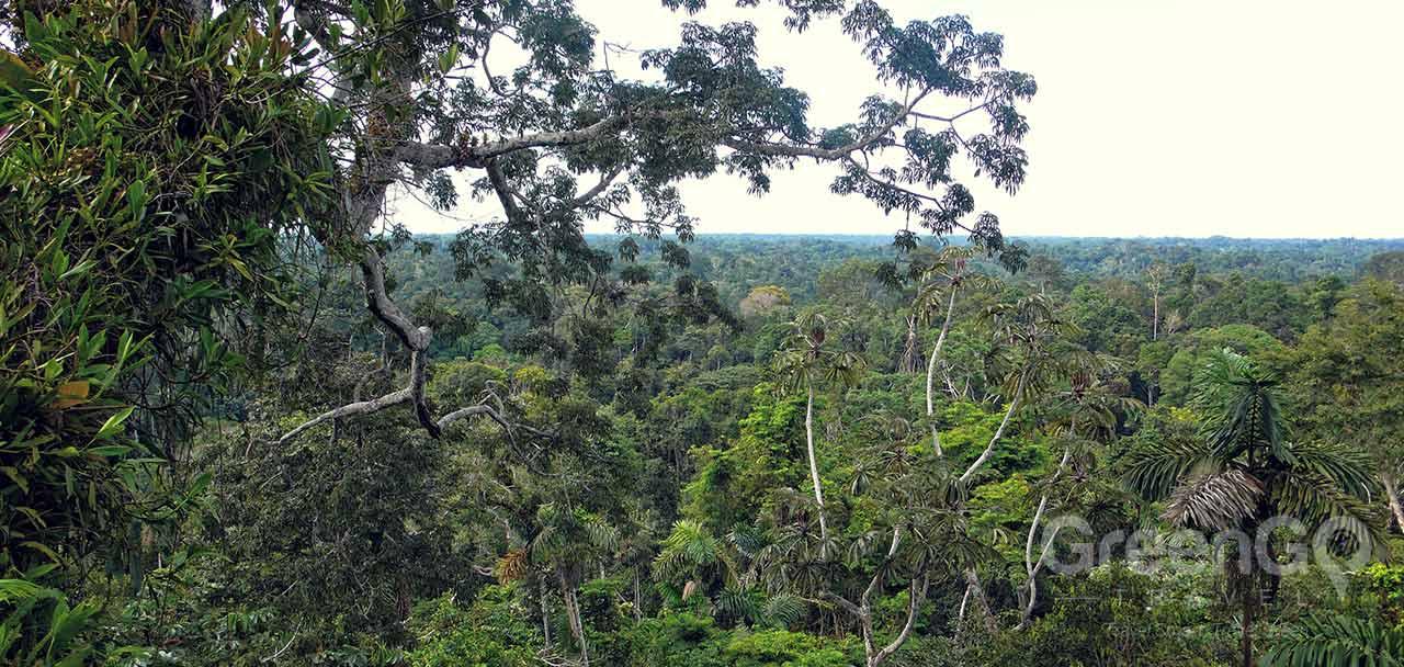 Yarina Lodge Amazon Rainforest Greengo Travel
