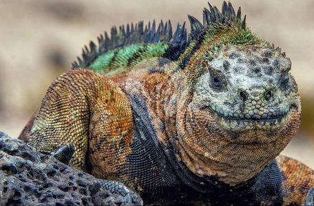 Galapagos Evolution