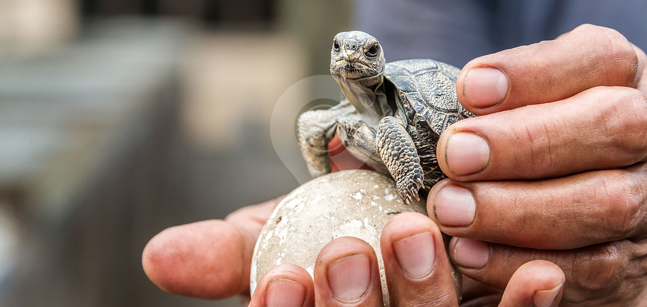 Galapagos Park Rules Header