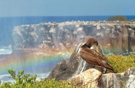 When to visit Galapagos 2017 Guide