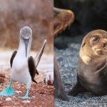 elite galapagos cruise airfare -Choosing an Itinerary