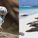 alya galapagos cruise in 2019 - introducction alya galapagos cruise in 2019