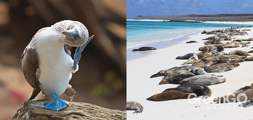 alya galapagos cruise in 2019 - introducction alya galapagos cruise in 2019