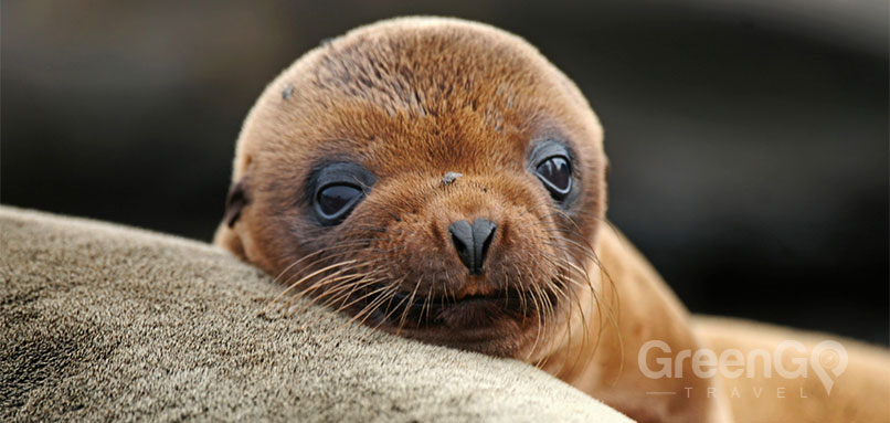 Cormorant-Galapagos-Cruise-in-2019-Galapagos-Sea-lion