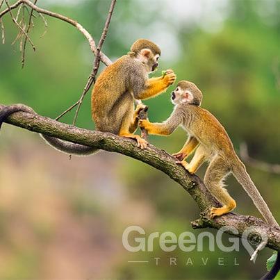 anakonda-amazon-cruise-ship-tour-Amazon monkeys