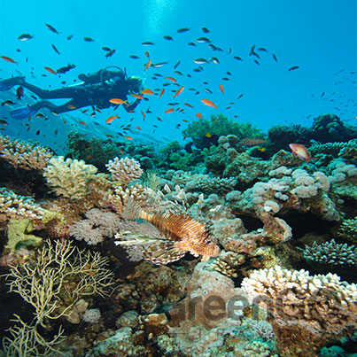 Benefits-Aboard-the-Calipso-Galapagos-Diving-Cruise---Scuba-Diving-in-the-Galapagos