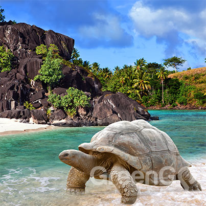 Galapagos Tortoise at the sea shore