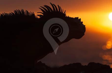 Conservation-of-an-Ecologocal-Paradise-Iguana-during-sunset