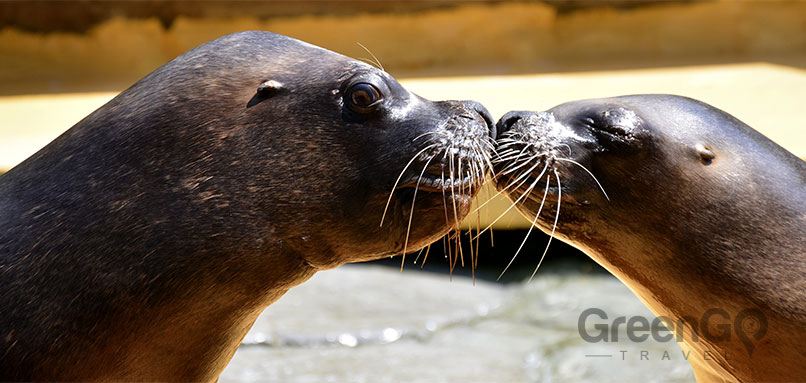 Galapagos-Islands-Conservation-Seals-kissing
