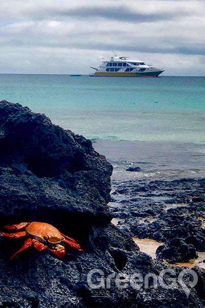Elite Galapagos Catamaran-Galapagos Crab with Elite in the Background