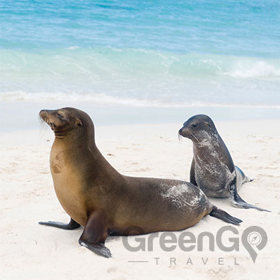 Hawaii-Versus-Galapagos.Sea-lions-on-a-white-beach