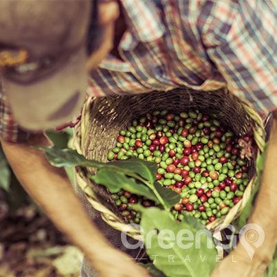 Sustainable-Travel-to-the-Galapagos-Islands-Ecuadorian-coffee