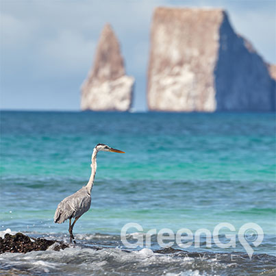Tip-Top-V-Galapagos-Cruise-Highlights-Galapagos-Heron-and-kicker-Rock