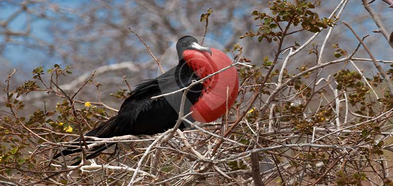 Darwin-Bay - Galapagos Islands