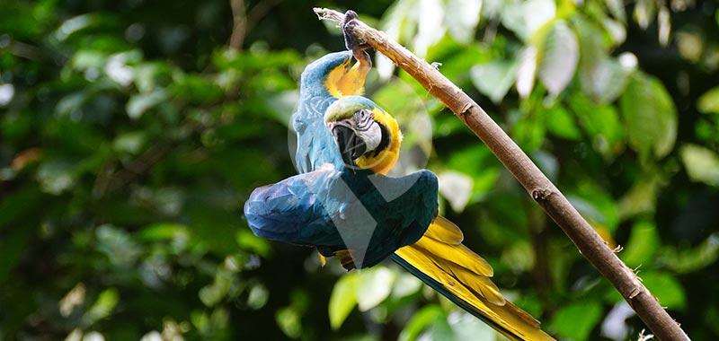 Piranha Amazon Lodge - Day 5
