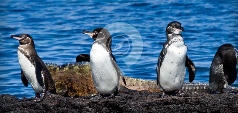 Punta Espinoza - Galapagos Islands
