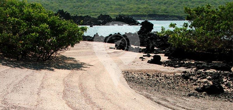 Urbina Bay - Galapagos Islands