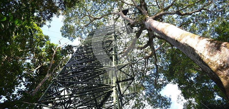 La Selva Eco Lodge - Day 2