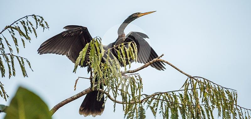 Sani Lodge - Birdwatching - Day 1