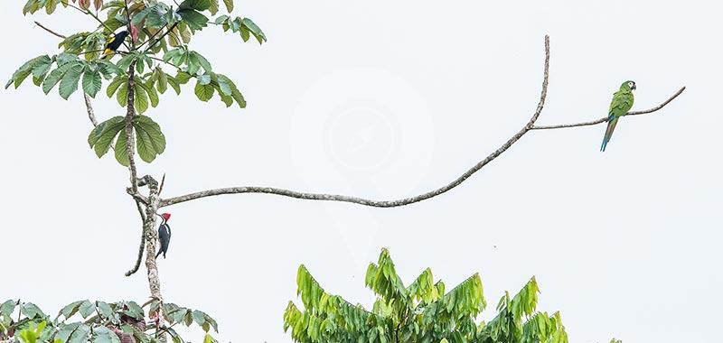 Sani Lodge - Birdwatching - Day 4