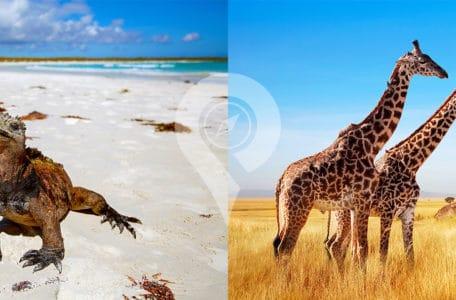 African Safari vs Galapagos Islands header