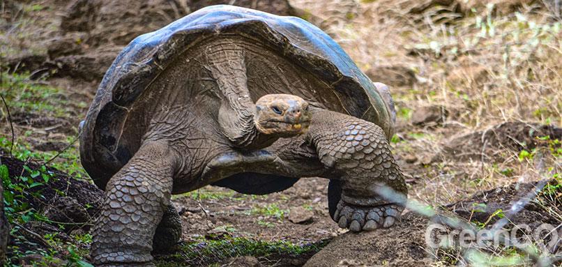 DIY-Galapagos-Travel-Guide-Galapaguera