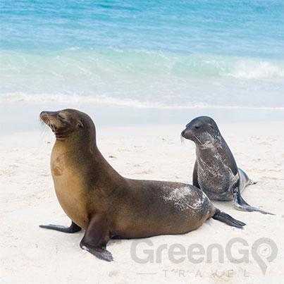 DIY-Galapagos-Travel-Guide-Playa-Loberia