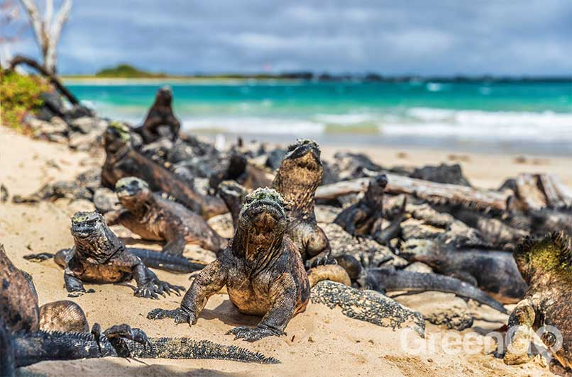 Galapagos-Islands-by-Region-Isabela-Wildlife-Colony
