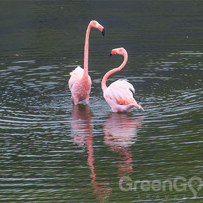 galapagos-weather-by-month-guide-flamingos