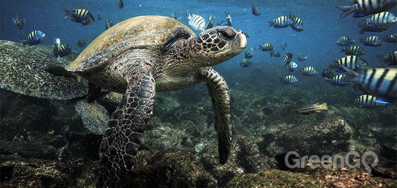 peru-ecuador-and-galapagos-tours-galapagos-tortoise