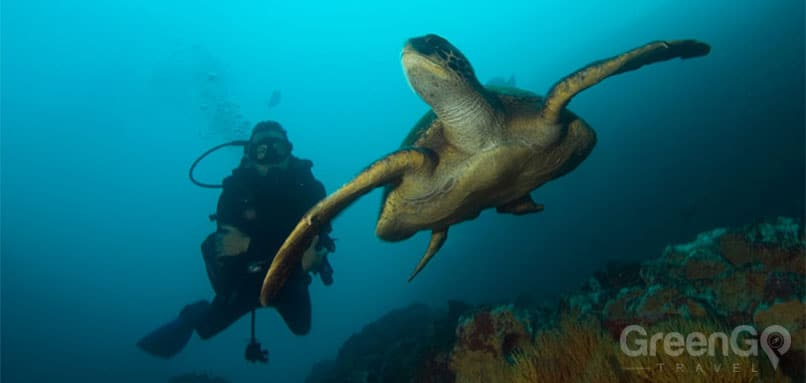 Scuba-Diving-and-Snorkeling-in-the-Galapagos-Sea-Turtle
